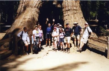 Yosemite Giant Sequoia