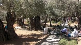 13 Garden of Gethsemane