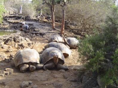 tortoises01283