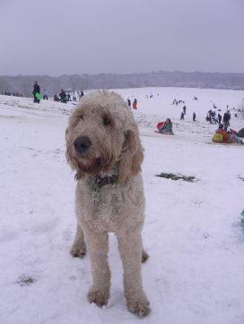 Dougal Snow