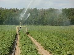 spraying