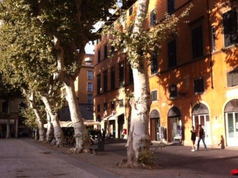 P Napoleone, Lucca